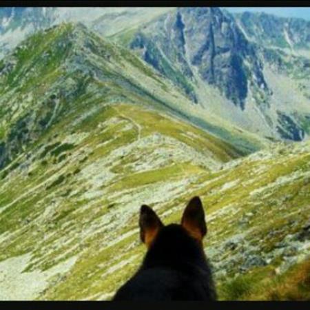 Montaña y mascotas